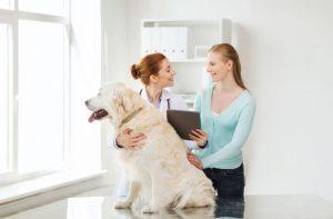 dog checkup at the vet